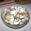 Recette Coques (sauce à la crème) (Entrée - Cuisine familiale)